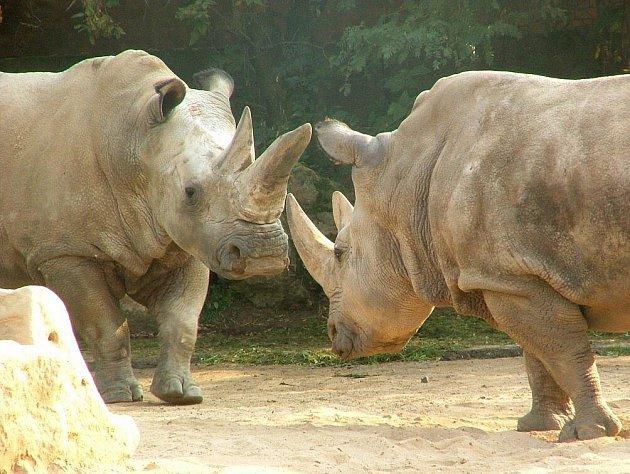 Photo of Uhynul poslední samec vzácného nosorožce severního bílého
