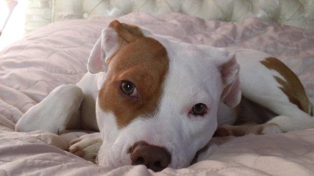 Photo of Majitelka neslyšícího psa uděluje příkazy znakováním