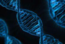 Photo of Neslyšící pár zRuska chce upravit DNA pro své dítě