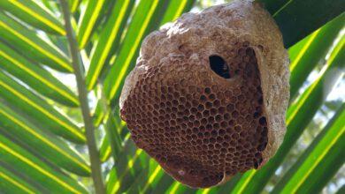 Photo of Muž poútoku včel zcela ztratil sluch
