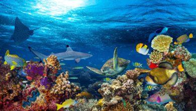 Photo of Světový den oceánů