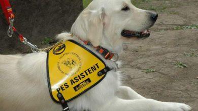 Photo of Asistenční pes