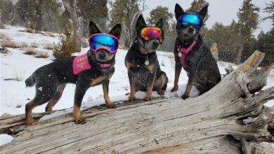 """Photo of Neslyšící pes má psí kamarády, kteří jsou jeho """"ušima"""""""